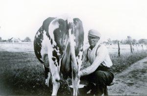 Vianen Piet Cornelissen bij het melken van de koe.