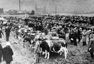 Cuijk Fokveedag aan de Maas Okt. 1931
