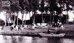 De boerdeij Everdineweerd van de familie F. Cloostermans op het voormalig Maas eilandje Middelweert. Dit eilandje bevond zich bij het dorp Katwijk.